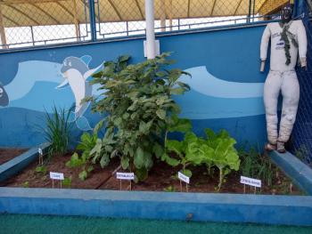 Horta - Jardim I