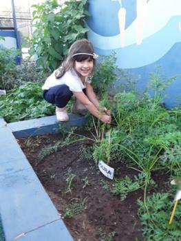 Horta: Plantio de Cenoura - Jardim I